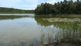 Nombres Trintsee del lago en Havelland Alemania Paisaje en tiempo de verano con la caña y el bosque alrededor almacen de metraje de vídeo