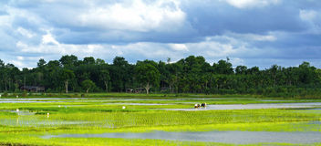 In nome di riso tailandese Fotografia Stock