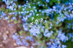 Nomeie flores desconhecidas no lado da estrada na mola fotografia de stock