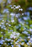 Nomeie flores desconhecidas no lado da estrada na mola foto de stock