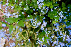 Nomeie flores desconhecidas no lado da estrada na mola imagem de stock