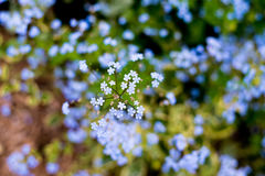 Nomeie flores desconhecidas no lado da estrada na mola Imagens de Stock