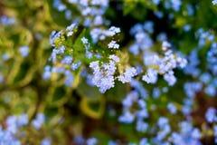 Nomeie flores desconhecidas no lado da estrada na mola fotografia de stock royalty free