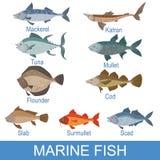 Nomi di Marine Fish Identification Slate With Fotografia Stock Libera da Diritti