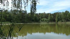 Nomi Trintsee del lago in Havelland Germania Paesaggio nell'ora legale con la canna e la foresta intorno video d archivio