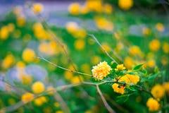 Nommez les fleurs inconnues du côté de route au printemps Photo stock