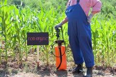 Non-organic maize field. Farmer standing in front of the non-organic maize field Stock Image