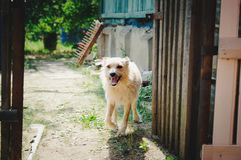 A dog guards his house. stock images