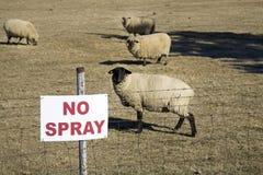 Non spruzzi il segno con le pecore fotografia stock
