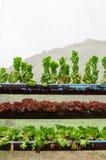 Non-toxic vegetable. In garden Stock Image