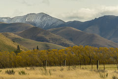 Non urban grassland against snow mountain at New Zealand. Non urban grassland against snow mountain at New Zealand Stock Photos