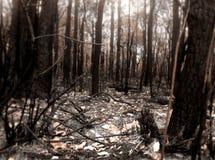 灌木火场面 库存照片