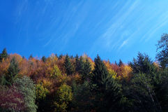 χρώματα φθινοπώρου Στοκ Εικόνα