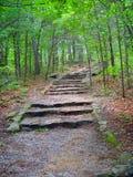οδικά δάση Στοκ εικόνες με δικαίωμα ελεύθερης χρήσης
