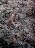 лава Стоковая Фотография
