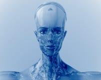 робот Стоковые Изображения