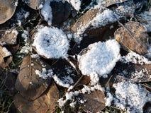 冻结世界 免版税库存图片
