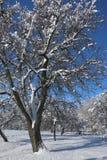 雪 免版税库存照片