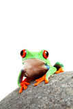 青蛙查出的岩石 免版税库存图片