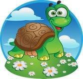 草龟 库存图片
