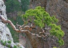 δέντρα κλίσεων βράχων Στοκ εικόνες με δικαίωμα ελεύθερης χρήσης