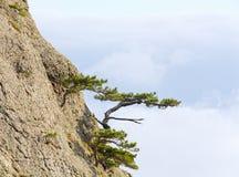 δέντρα κλίσεων βράχων Στοκ Εικόνες