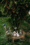 鹅 免版税库存图片
