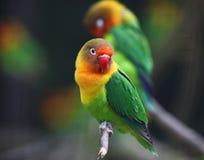 влюбленность птицы Стоковое Изображение
