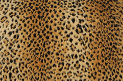 кожа леопарда Стоковое Фото