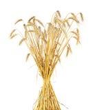 捆麦子 免版税库存照片