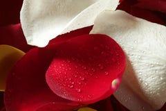 το ζωηρόχρωμο πέταλο προτύ& Στοκ φωτογραφία με δικαίωμα ελεύθερης χρήσης