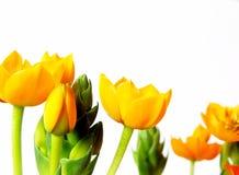 желтый цвет цветений Стоковая Фотография RF
