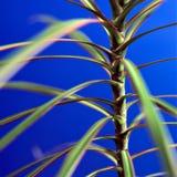 μπλε φυτό Στοκ εικόνες με δικαίωμα ελεύθερης χρήσης