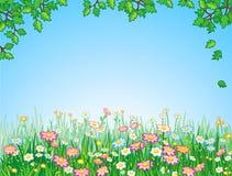 绿色草甸向量 图库摄影