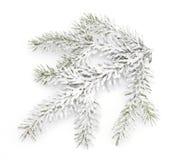 多雪的枝杈 库存照片