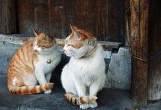 猫二 免版税库存照片
