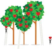 δέντρα αγάπης Στοκ Εικόνες
