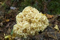 花椰菜特写镜头蘑菇 库存图片
