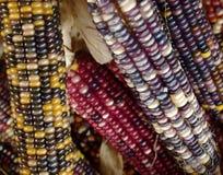 多色的玉米 免版税库存照片