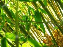 внутренний тростник Стоковые Фото
