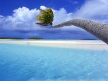 在弯曲的盐水湖棕榈树间 库存照片