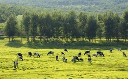 牧人风景 免版税库存图片