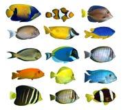 热带鱼的礁石 免版税库存照片