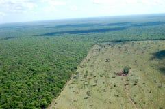 обезлесение Стоковая Фотография RF