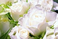 开花空白的玫瑰 免版税库存照片
