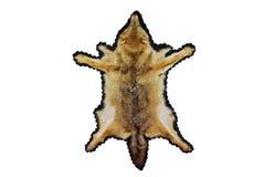 狐狼皮肤 库存照片