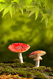 秋天背景复制秋天通配蘑菇的空间 免版税库存图片