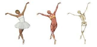 解剖芭蕾重叠 免版税库存图片