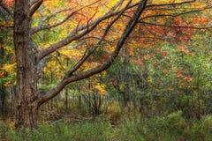 阿卡迪亚秋天叶子国家公园 库存图片