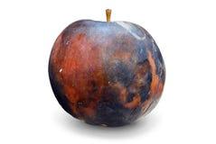 苹果烂掉了 免版税库存照片